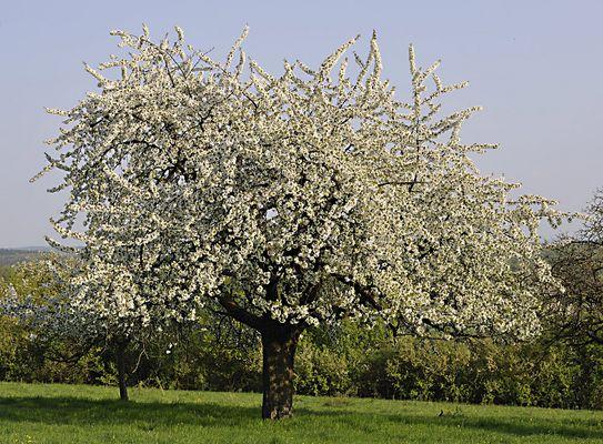 der Frühling soll endlich kommen......!