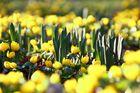Der Frühling steht in den Startlöchern.
