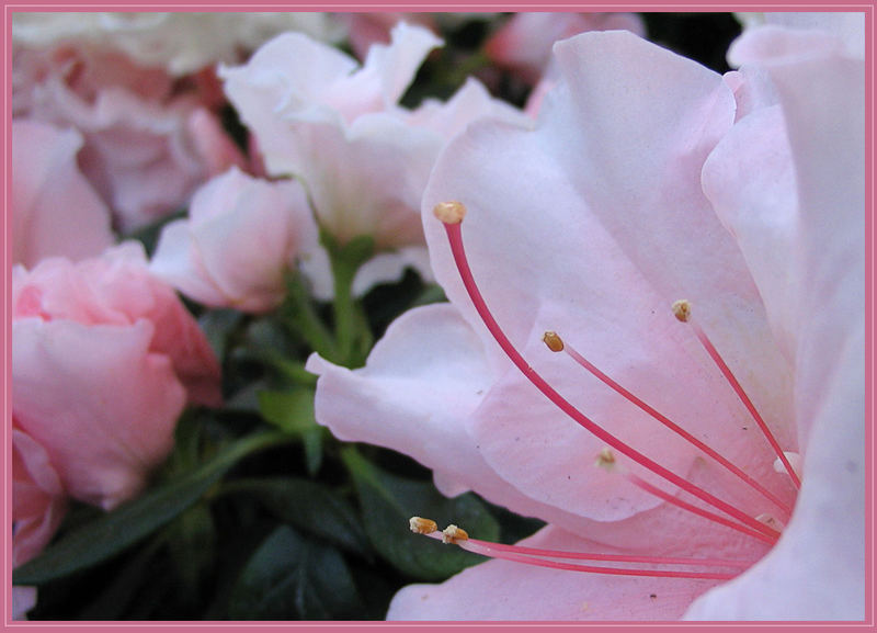 der Frühling streckt die Fühler aus