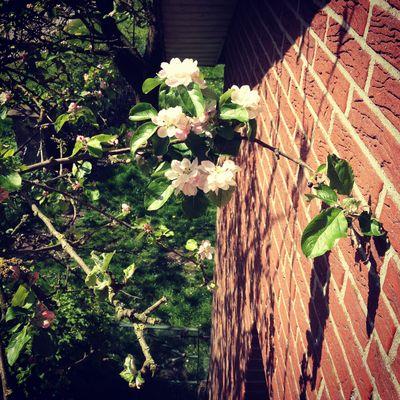 Der Frühling vom Balkon aus
