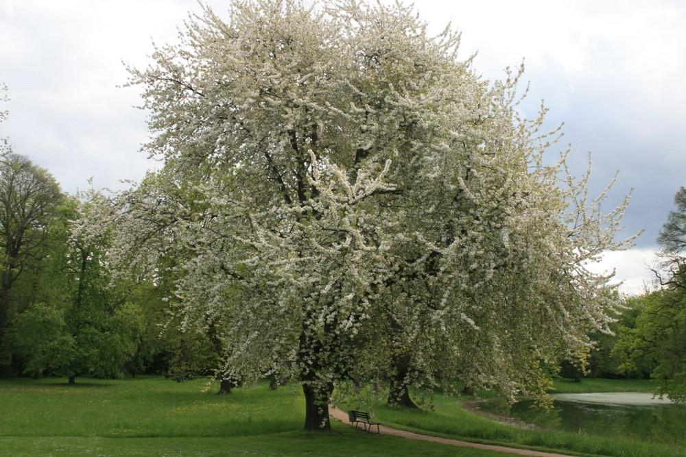 Der Frühling von seiner schönsten Seite