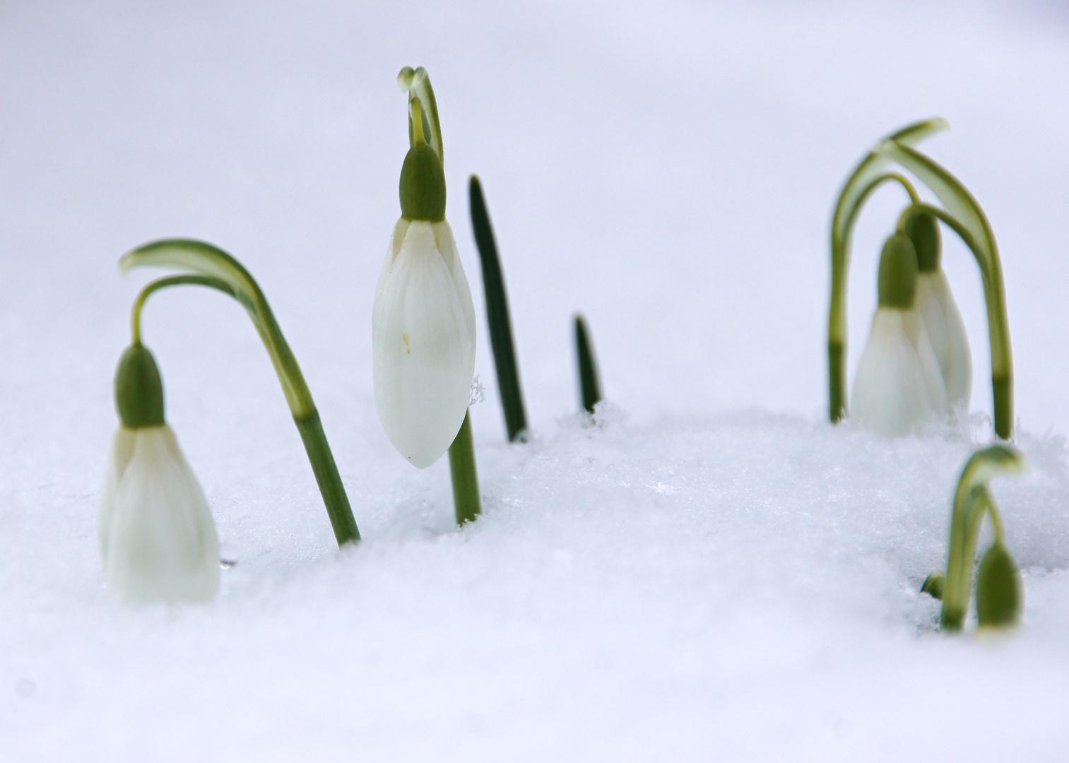 der Frühling war da