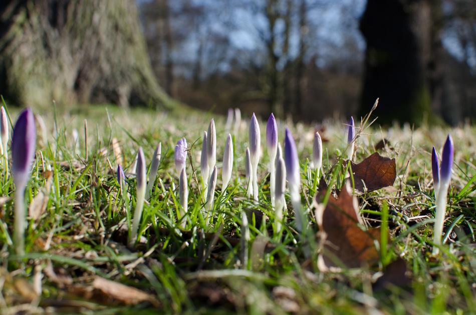 Der Frühling war mal kurz da