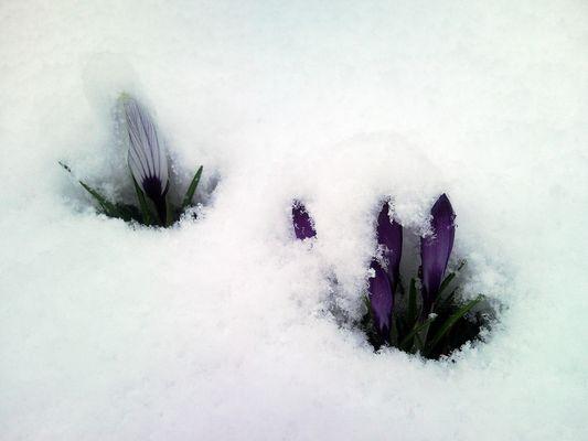Der Frühling war noch weit ...