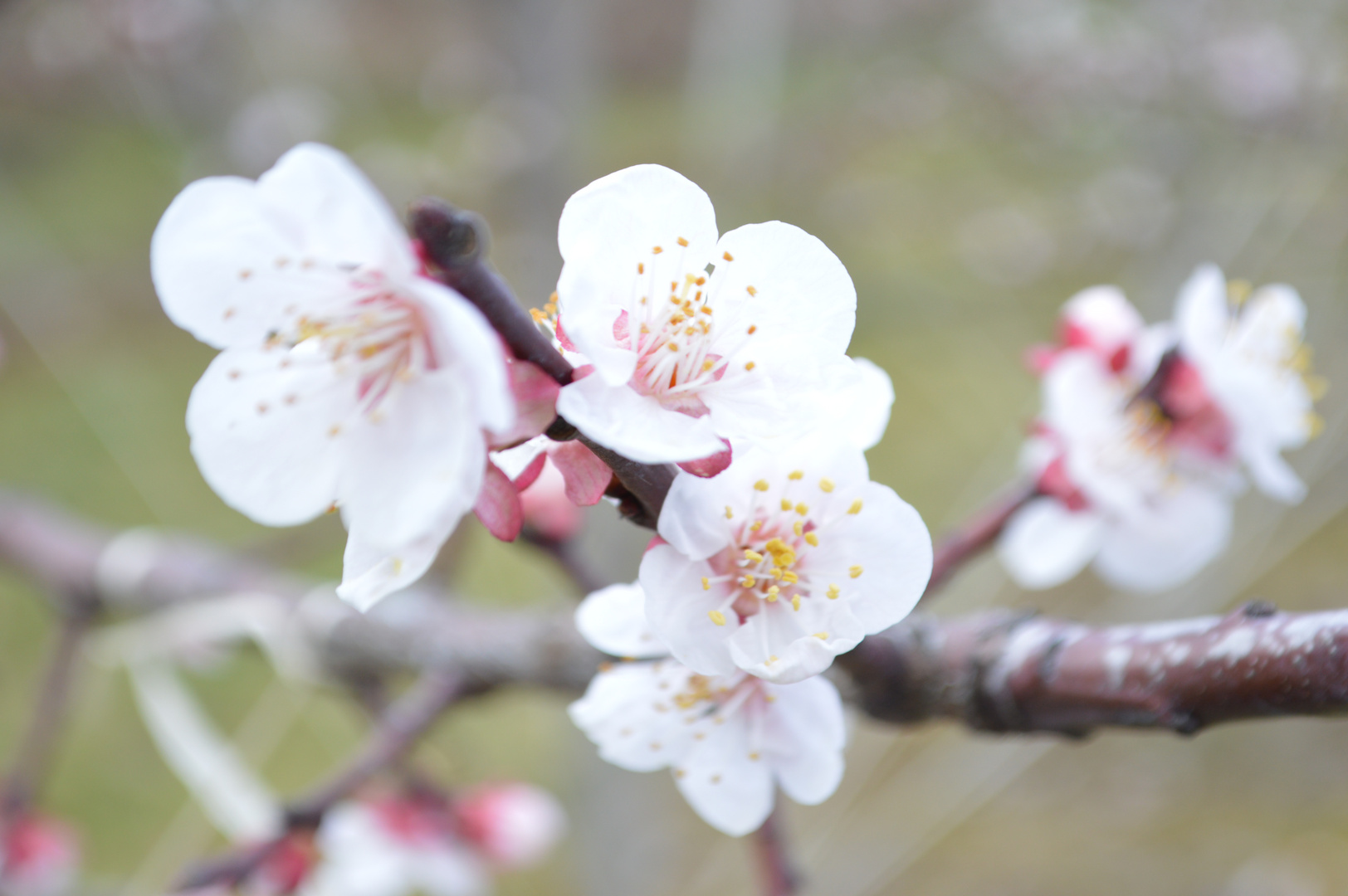 Der Frühlingsanfang