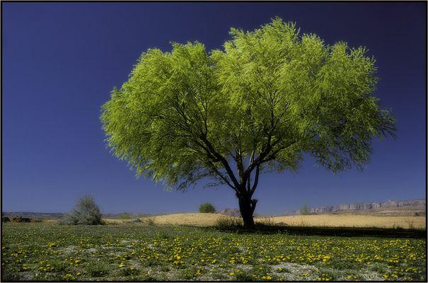 Der Frühlingsbaum