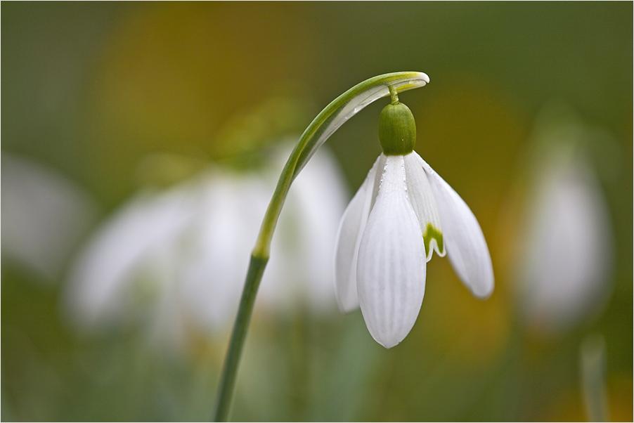 Der Frühlingsbeginn ...