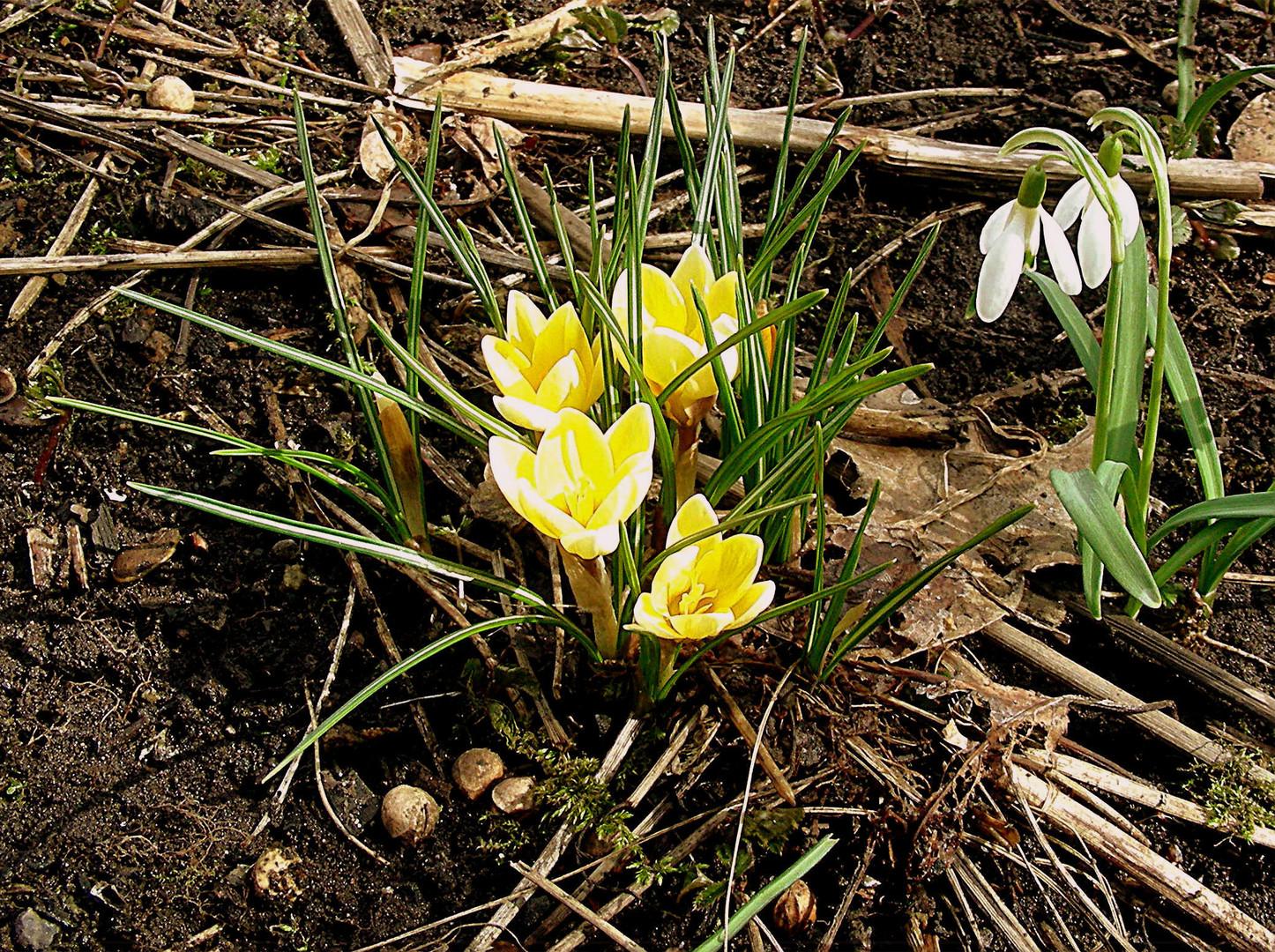Der Frühlingsbeweis