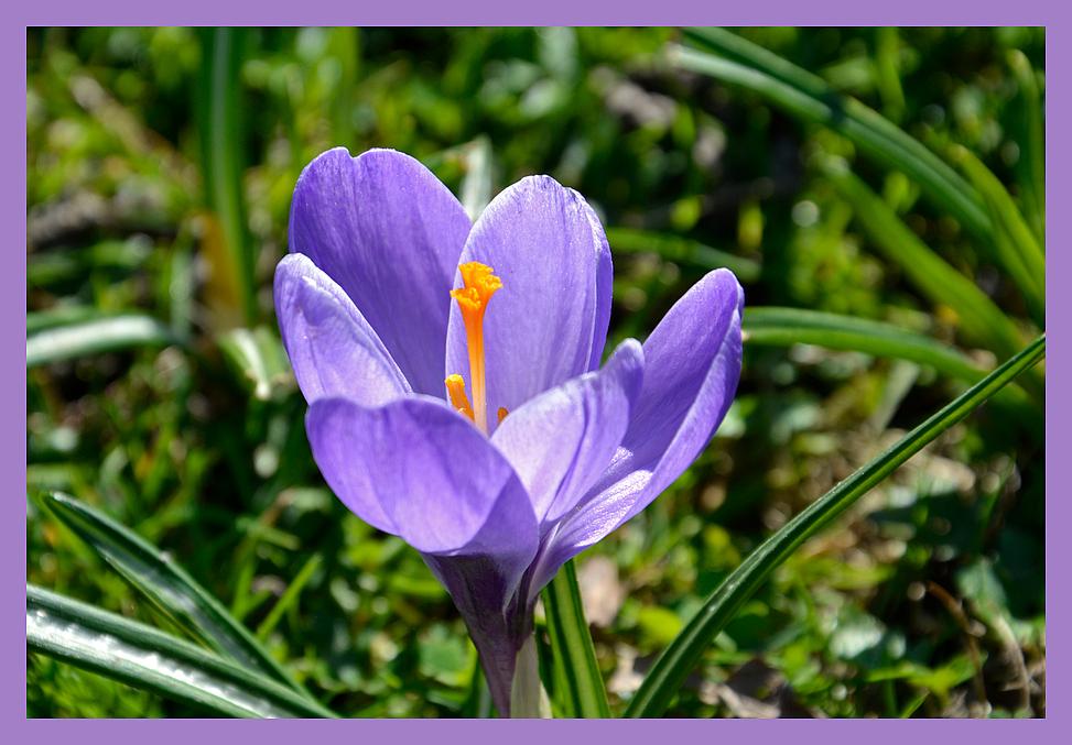 Der Frühlingsbote