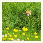 Der Fuchstest