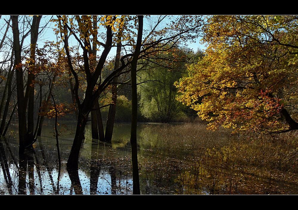 Der geheimnisvolle Teich