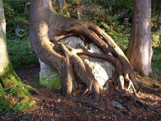 DER gehört mir! ...sprach der Baum