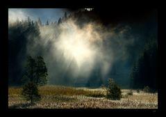 Der Geist aus dem Wald