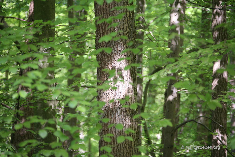 Der Geist des Baumes ....