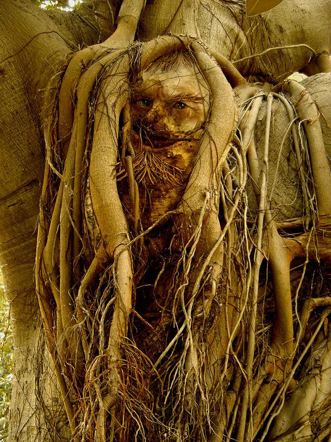 Der Geist des Ficus  /  Il fantasma del ficus