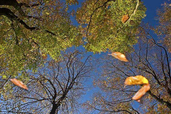 Der Geist des Herbstes -