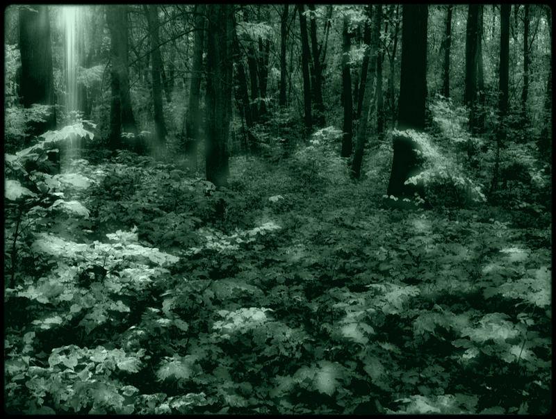 der Geist des Waldes...