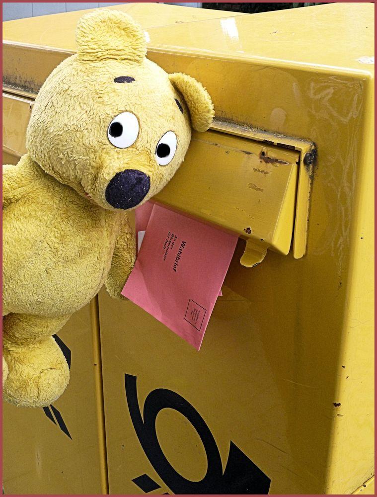 Der gelbe Bär hat gewählt