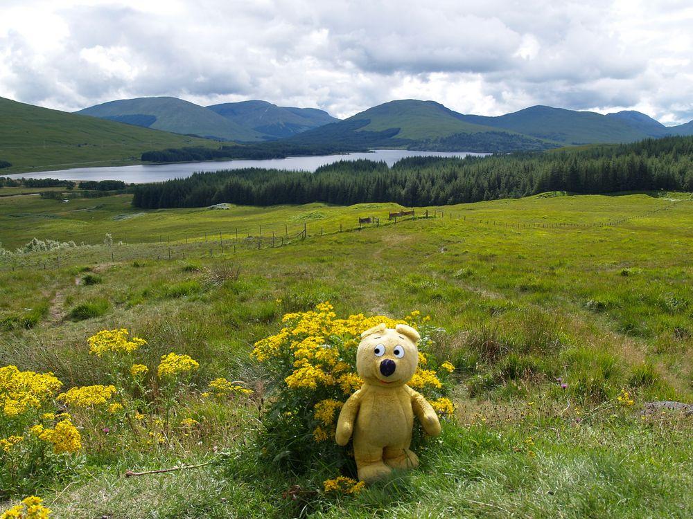 Der gelbe Bär in Schottland