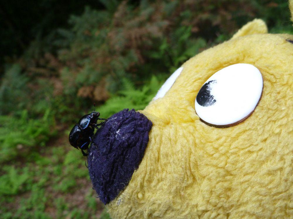Der gelbe Bär läßt sich doch kein Mist erzählen
