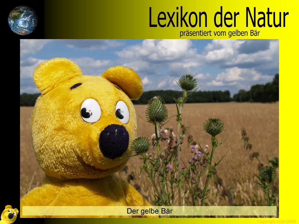 Der gelbe Bär Naturlexikon