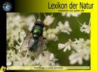 Der gelbe Bär Naturlexikon - Goldfliege