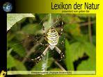 Der gelbe Bär Naturlexikon - Wespenpinne