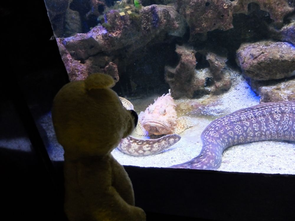 Der gelbe Bär und der wohl traurigste Fisch der Welt