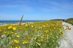 Der Gelbe Deich auf Hiddensee