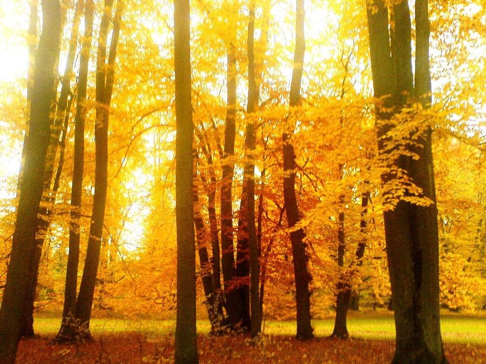 Der gelbe Herbst