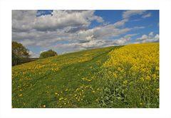 Der gelbe Hügel