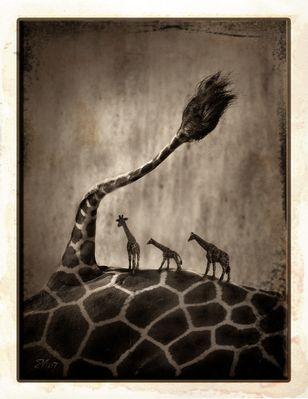 Der Giraffenbaum