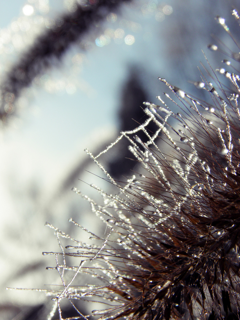 Der Glanz des Winters.