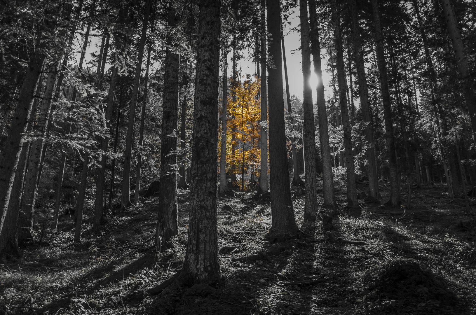 Der goldene Baum