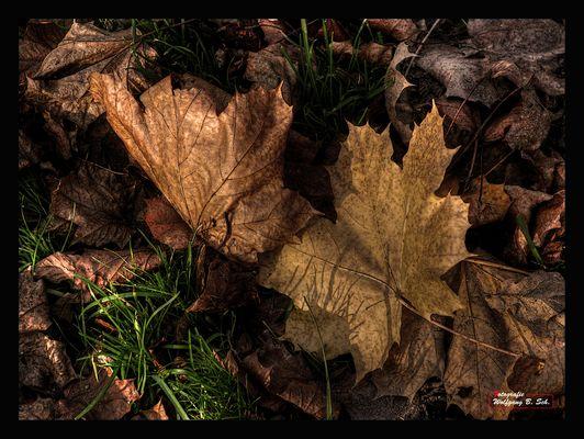 """""""Der Goldene Herbst"""""""
