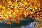 der goldene Herbst .