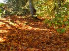 Der goldene Oktober