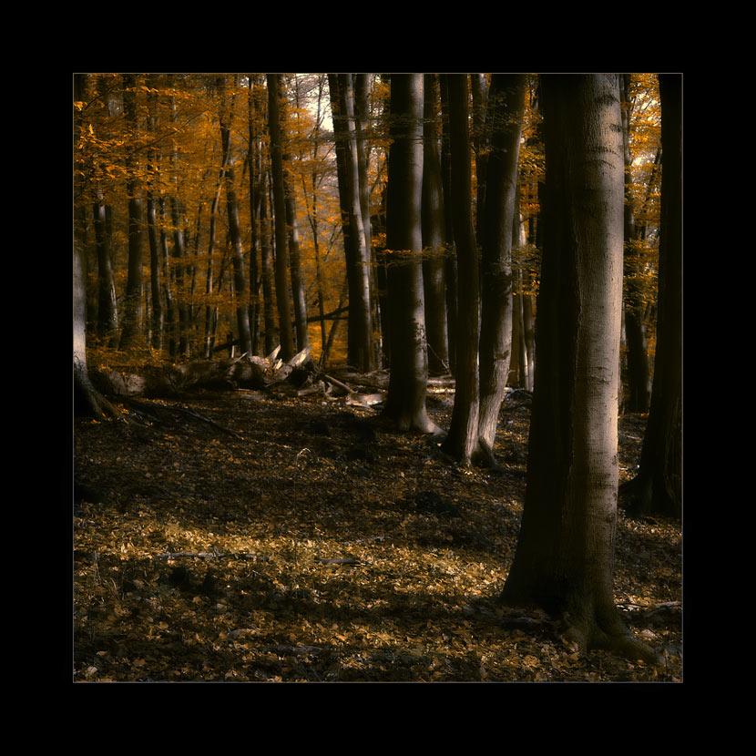Der goldene Wald