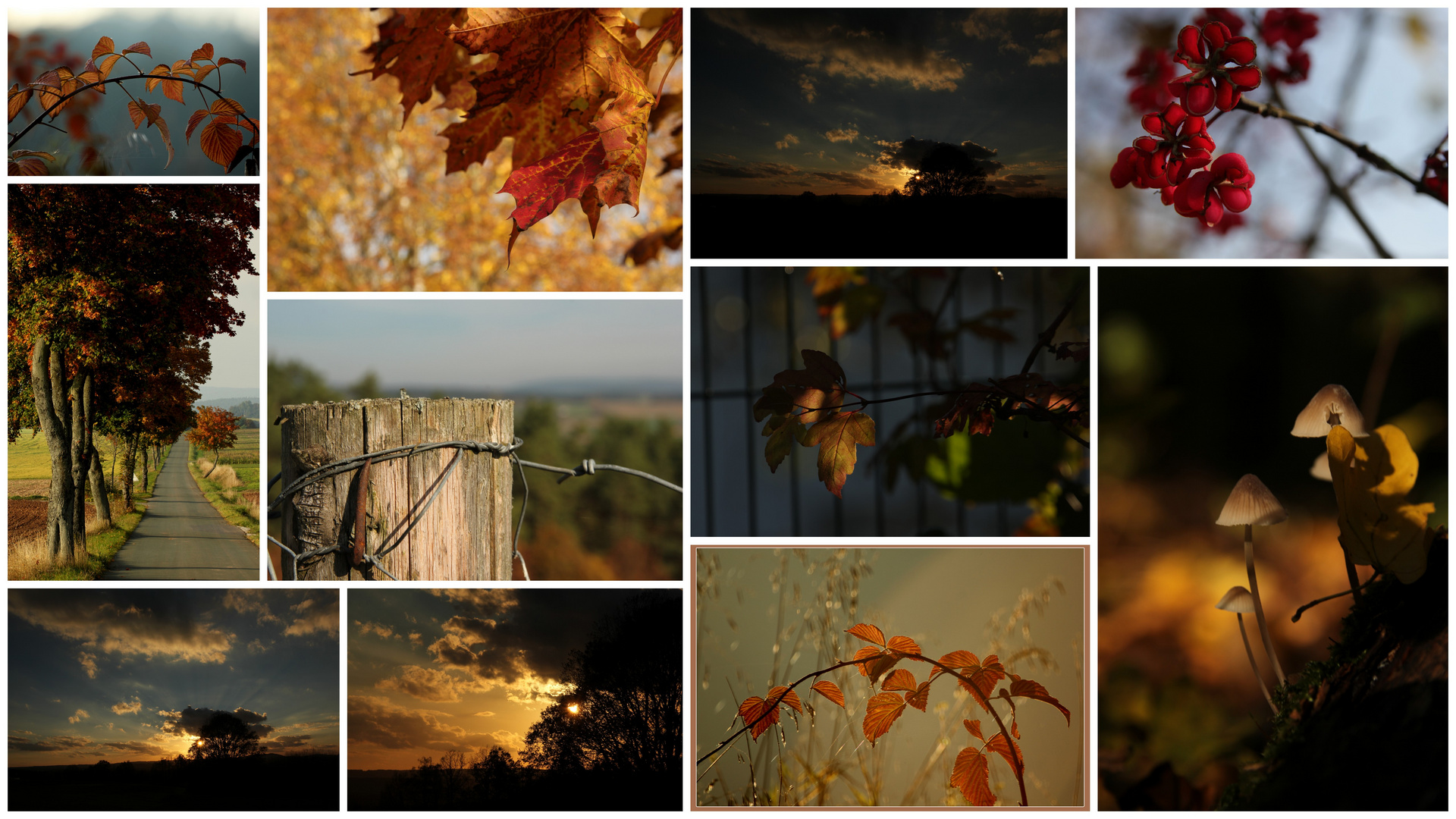 ...der goldenen Oktober ist auch schon wieder Vergangenheit