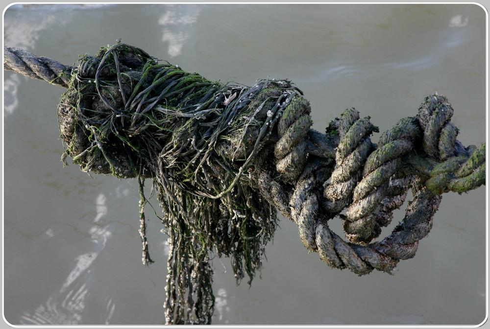 Der Gordische Knoten einmal friesisch!