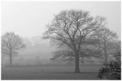 Der graue Tag