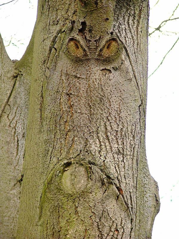 Der grimmige Baum