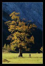 """Der """"große"""" Baum und der """"kleine"""" Fotograf"""