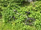 der grüne fahrradständer