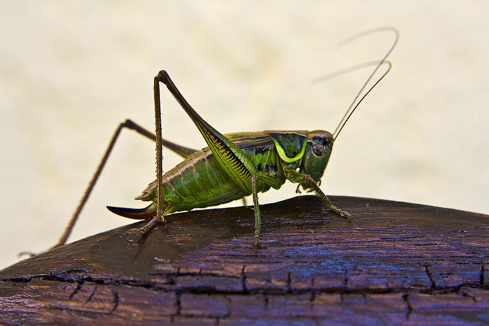 Der grüne Flip