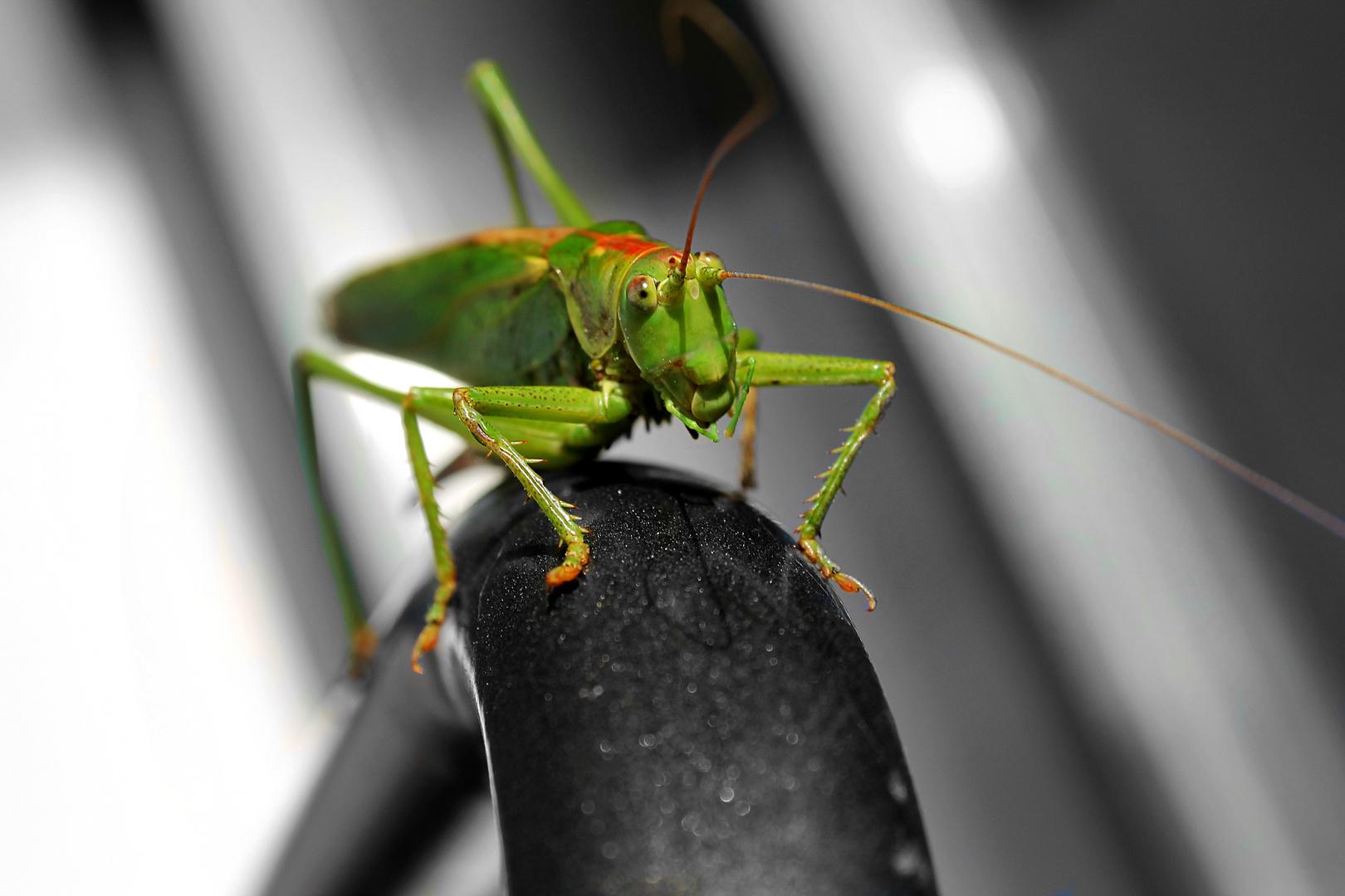 Der grüne Freund