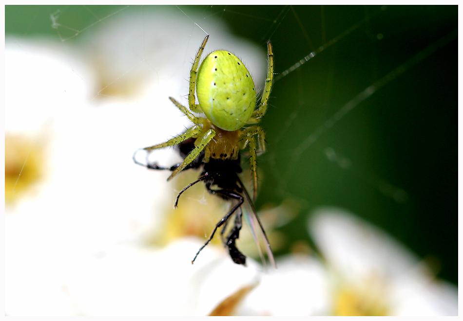 Der grüne Killer im Garten