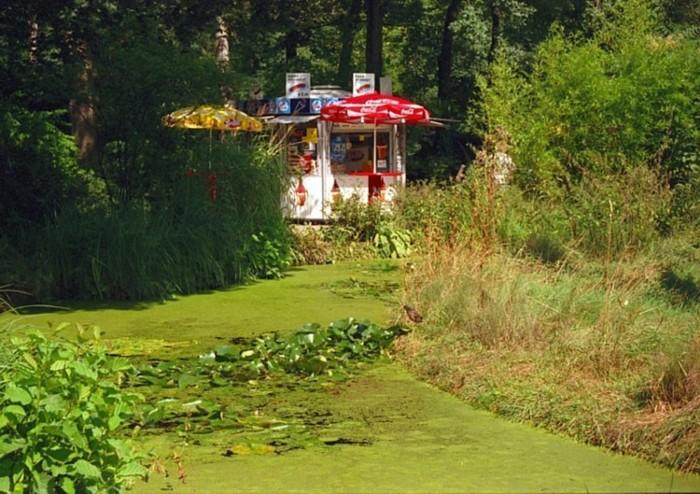 der grüne Teich