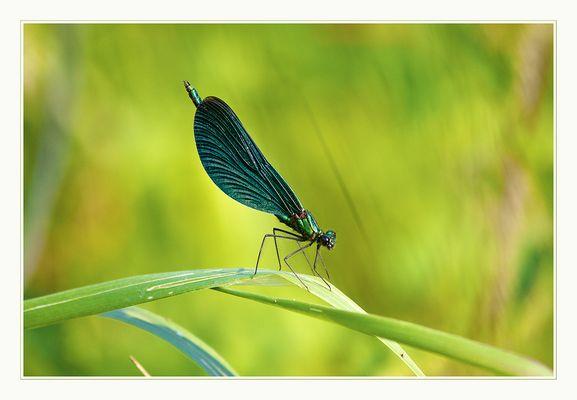 Der grüne Überflieger
