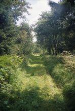 Der grüne Weg reloaded